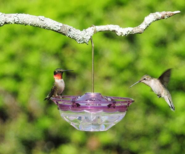 HummBlossom Rose hummingbird feeder
