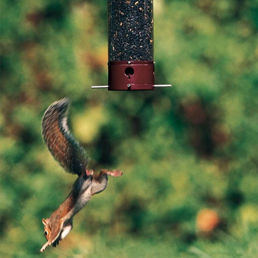 Droll Yankees Yankee Dipper Squirrel-Proof Birdfeeder