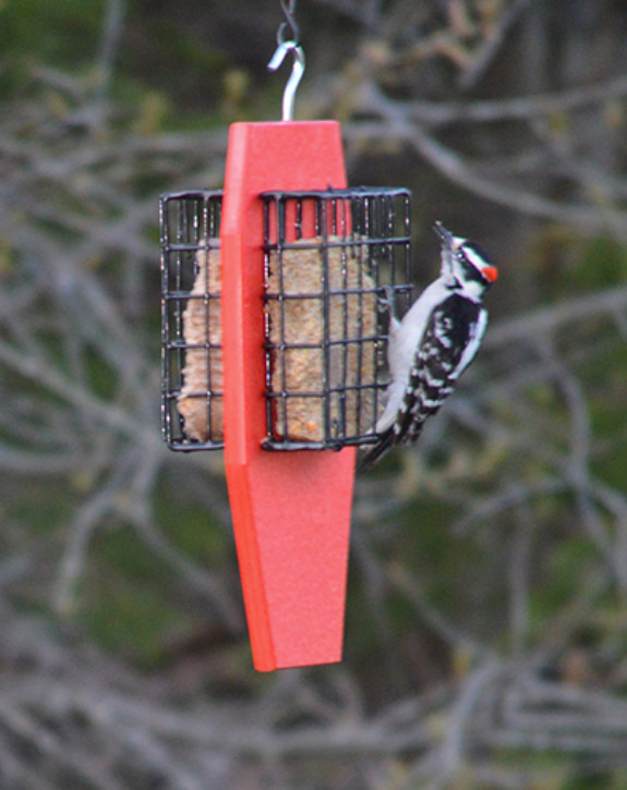Dual Cage Tail Prop Suet Feeder