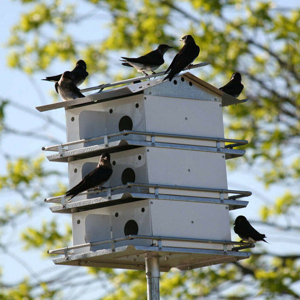 Purple Martin House with  3 floors and 12 rooms - starling resistant