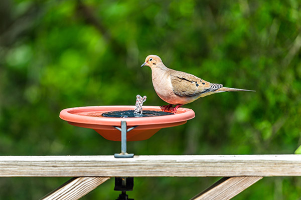 Deck Mounted Bird Bath