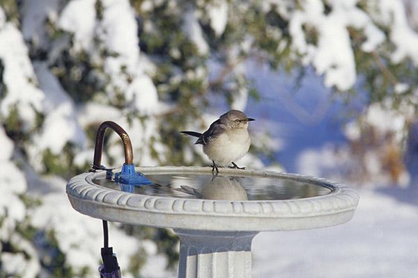 heated bird bath in the winter