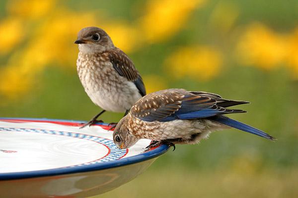 Decorative Birdbath