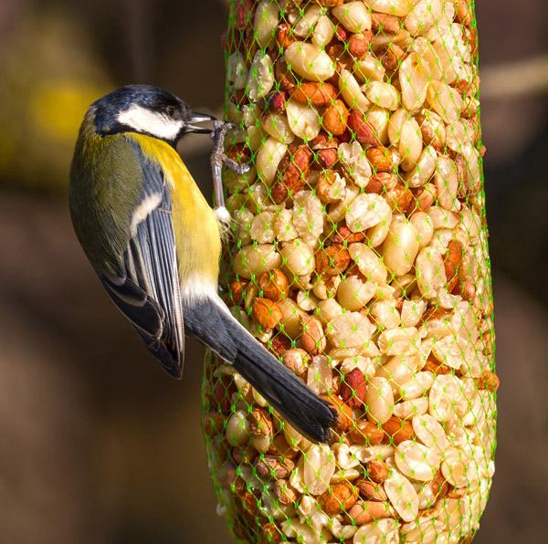 Hanging Bird Feed
