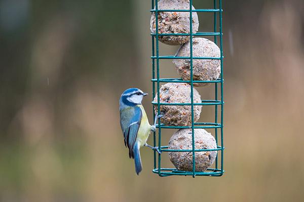 Suet Balls In Cage Feeder