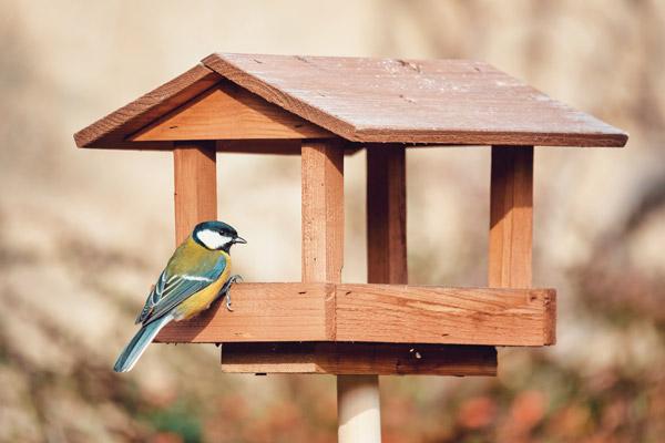 Pole Mount Bird Feeder