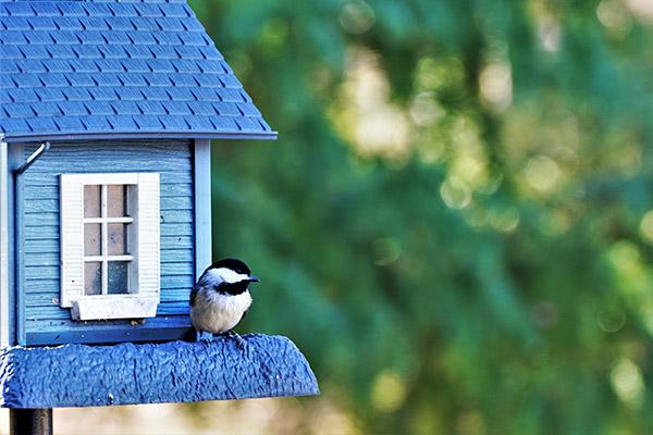 Specialty Bird Feeder