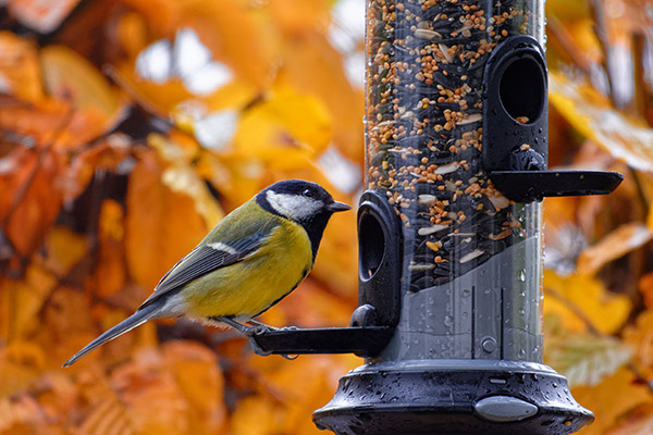 tube bird feeder with Great Tit