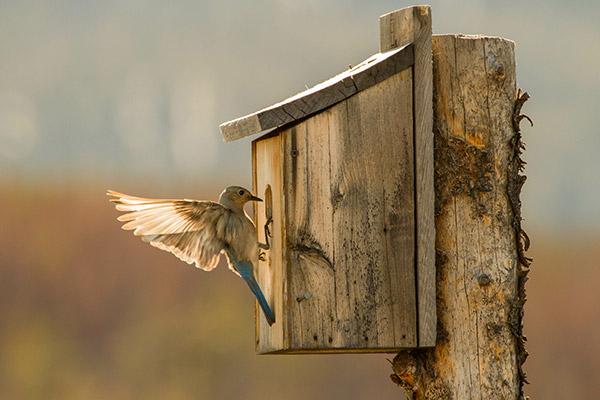 simple birdhouse