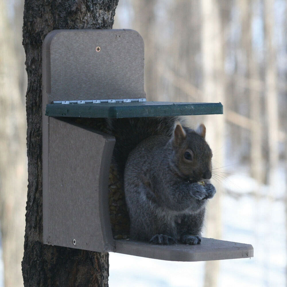 Birds Choice Recycled Squirrel Munch Box